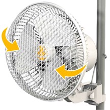 Secret Jardin - Monkey Fan (20W) 17 cm